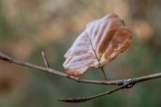 Herbst-
