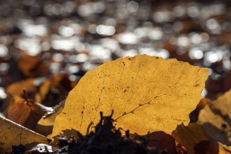 Herbst-16