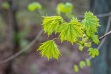 Frühling-
